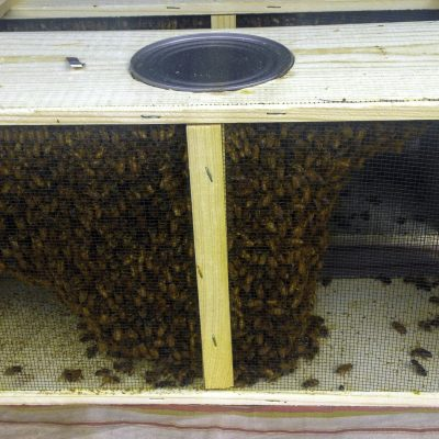Package Bees - 3 lb with Queen