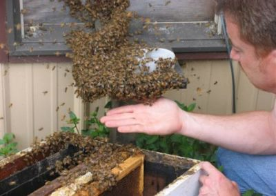 Tracy With Bees