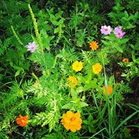 Hunter's Honey Farm Wildflower Seeds